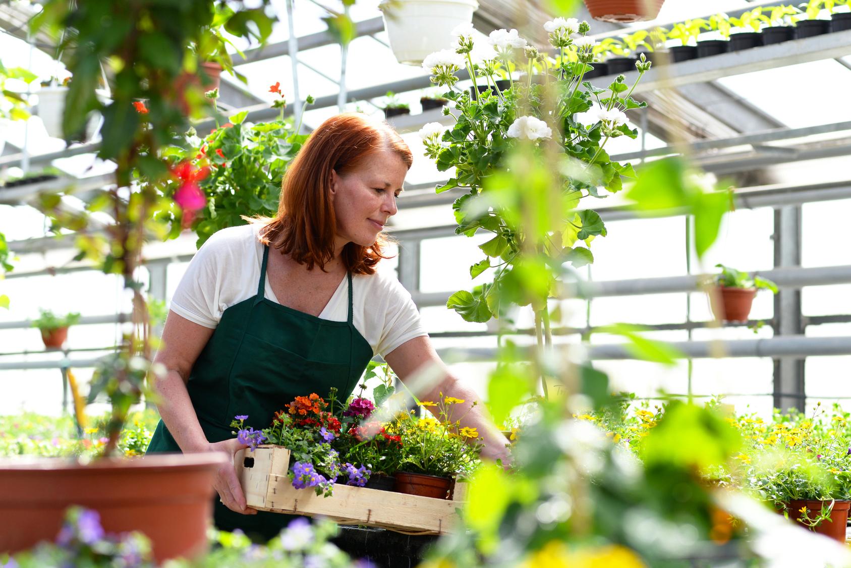 Ausbildung Gärtner Gehalt