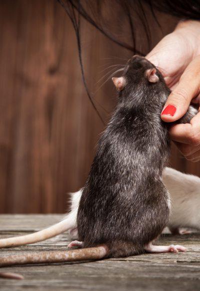 Tierpsychologie: Gehalt, Fernstudium, Studium, Ausbildung & Perspektive