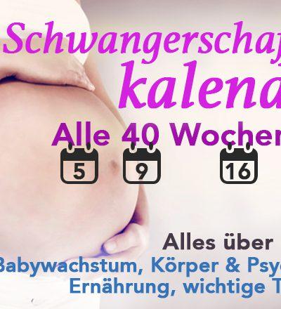 Schwangerschaftskalender: Alle 40 Wochen der Schwangerschaft