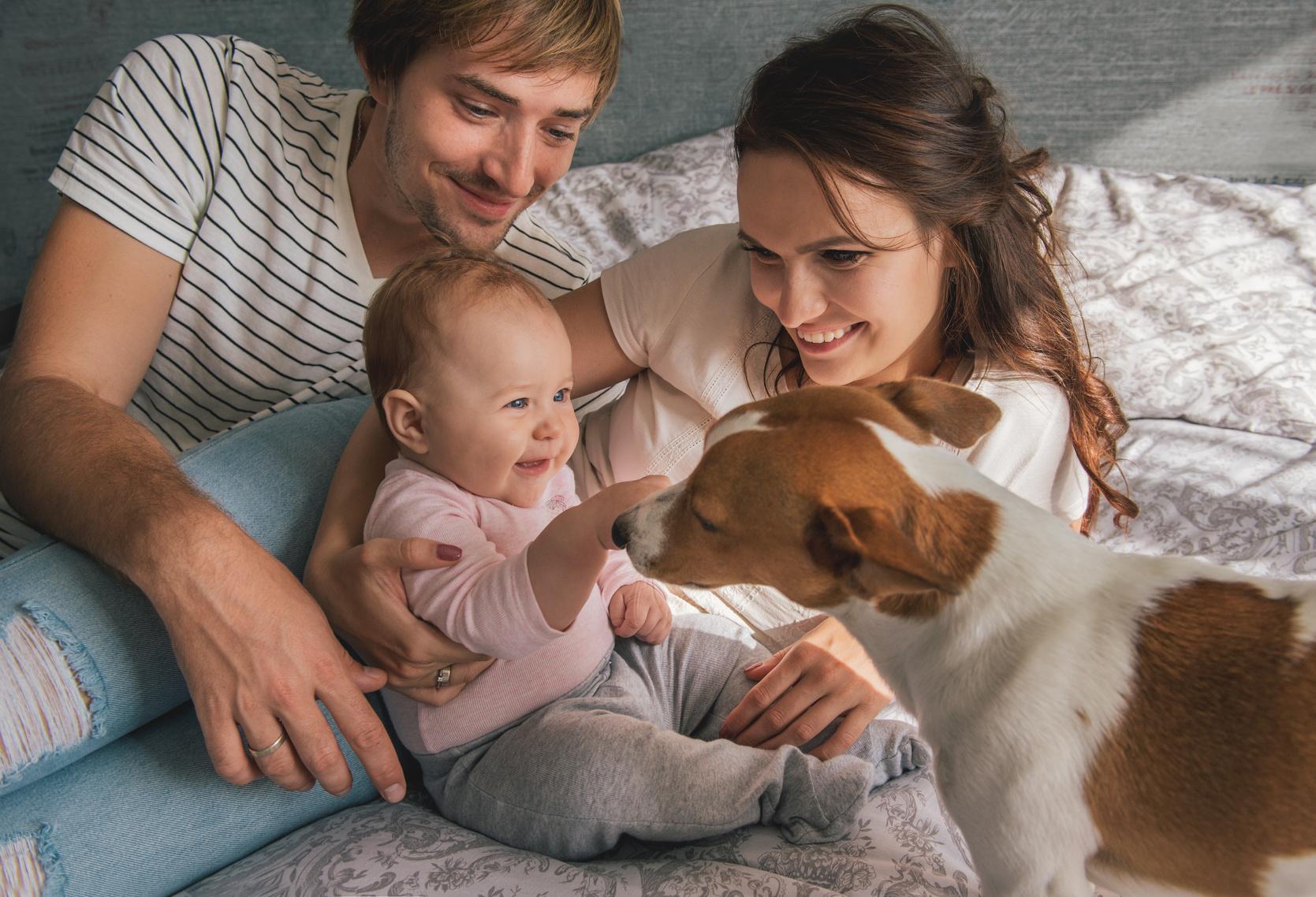 Hund rettet ungeborenes Baby