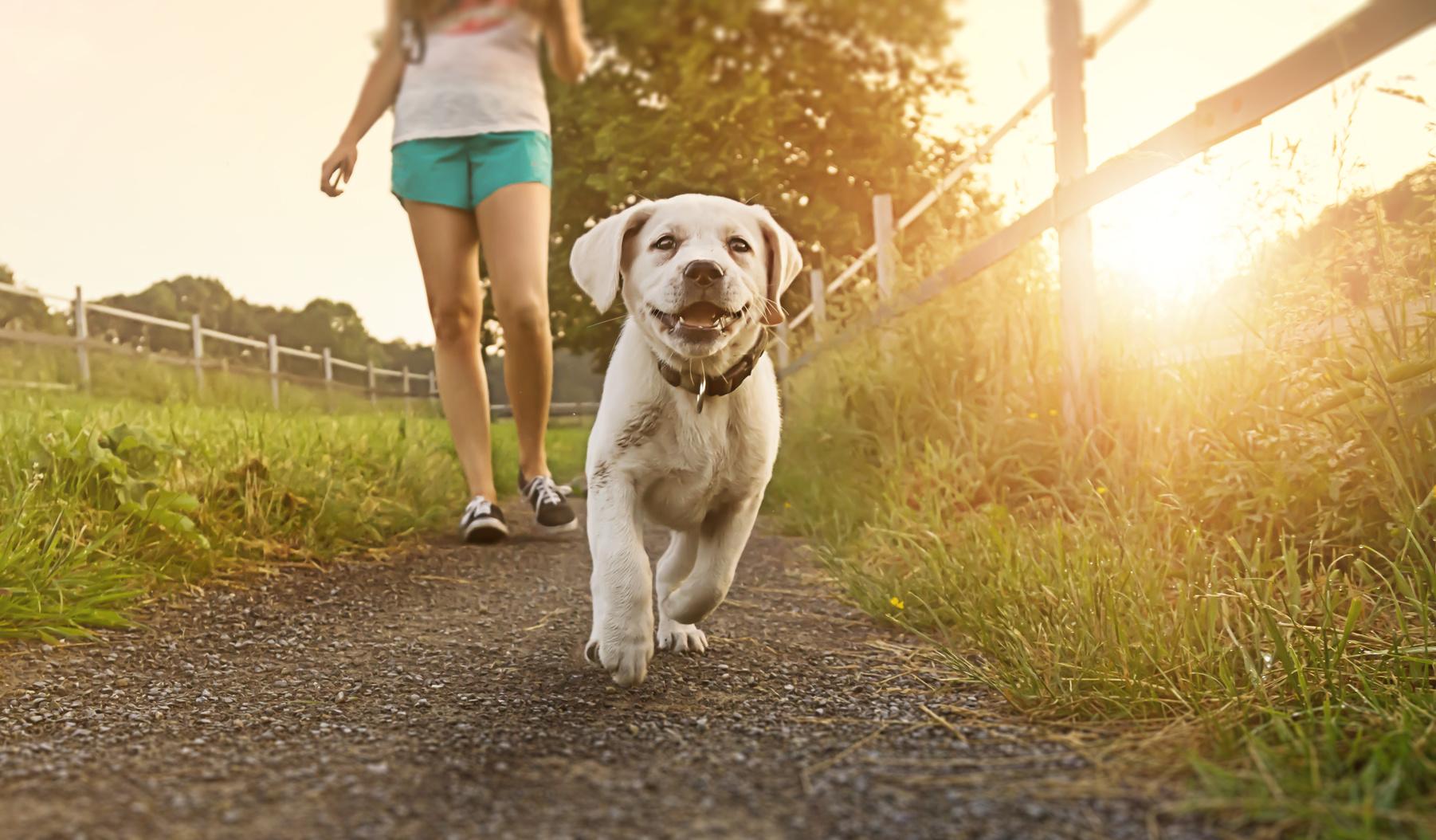 Gefährliche Hundeköder Warnung in Rheinland-Pfalz!