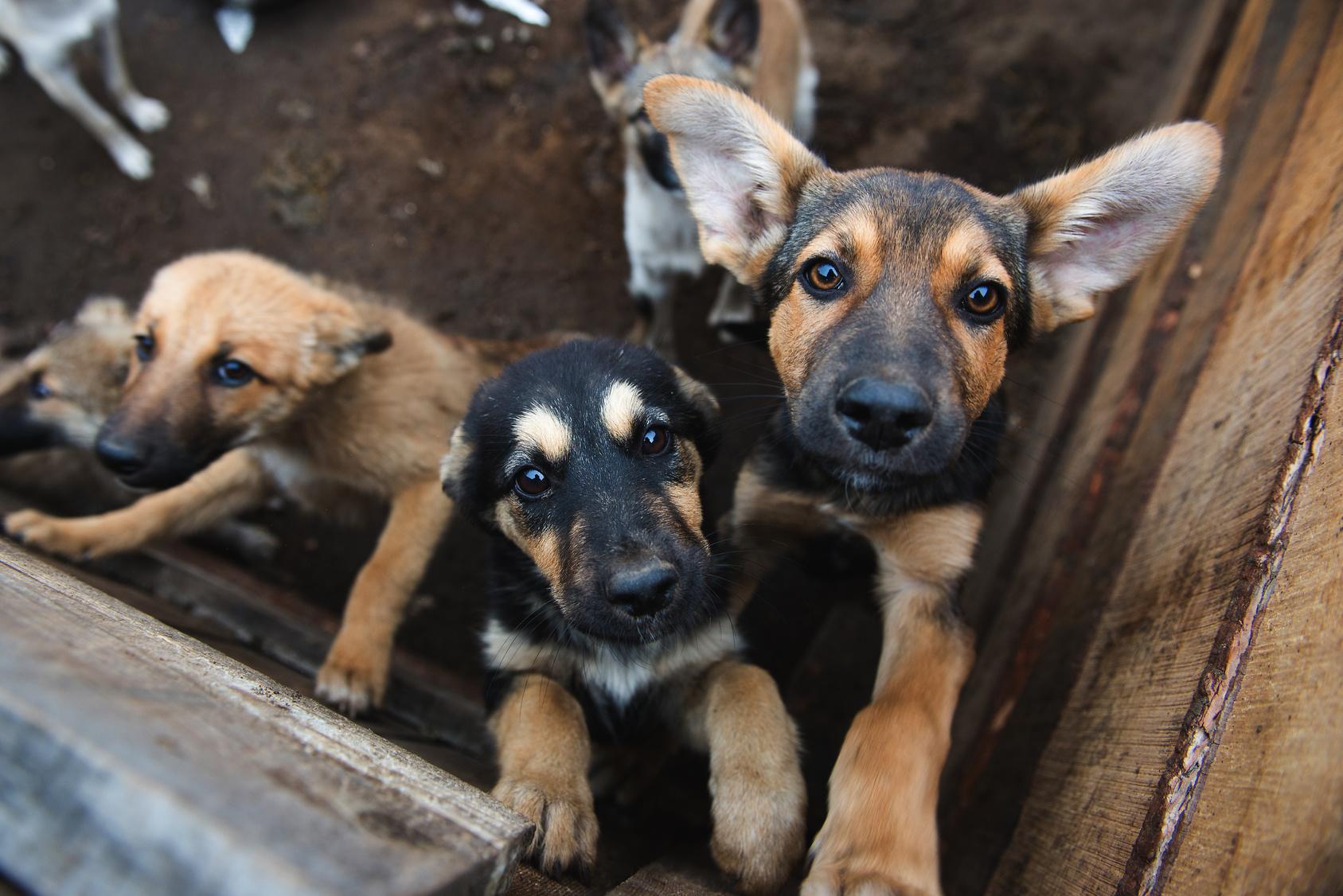 Ehepaar quält jahrelang 170 Hunde