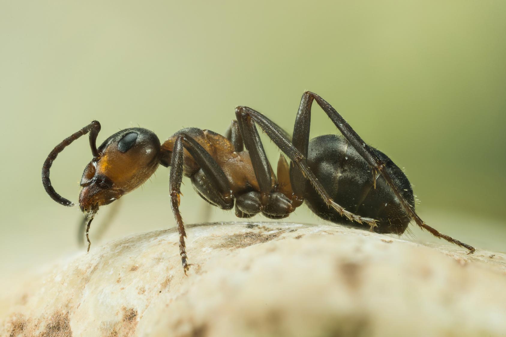 Ein wahrer Albtraum Patientin wacht in Krankenbett voller Ameisen auf