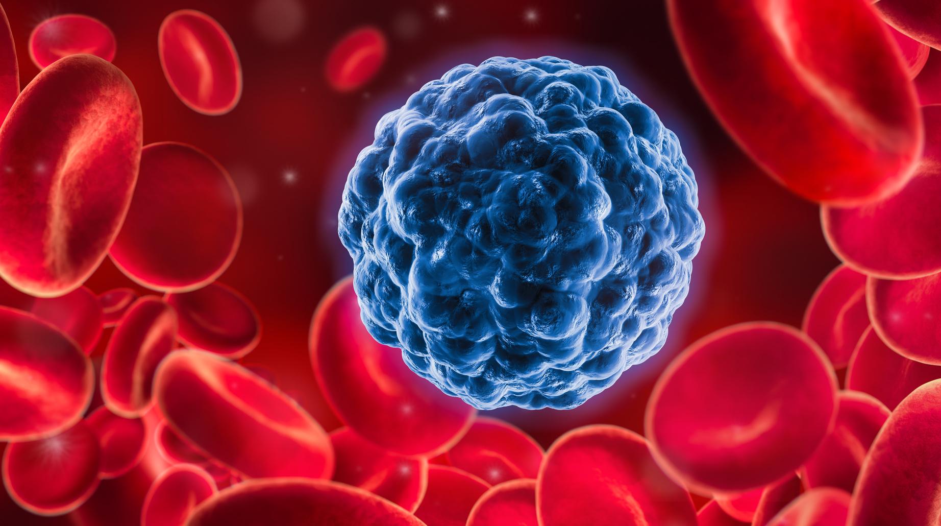 Krebs Mediziner finden Antikörper
