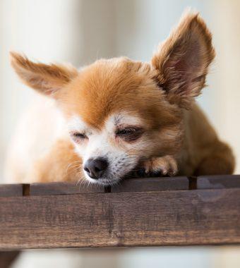 Abgemagert und halbtot: Hunde aus Wohnung gerettet!