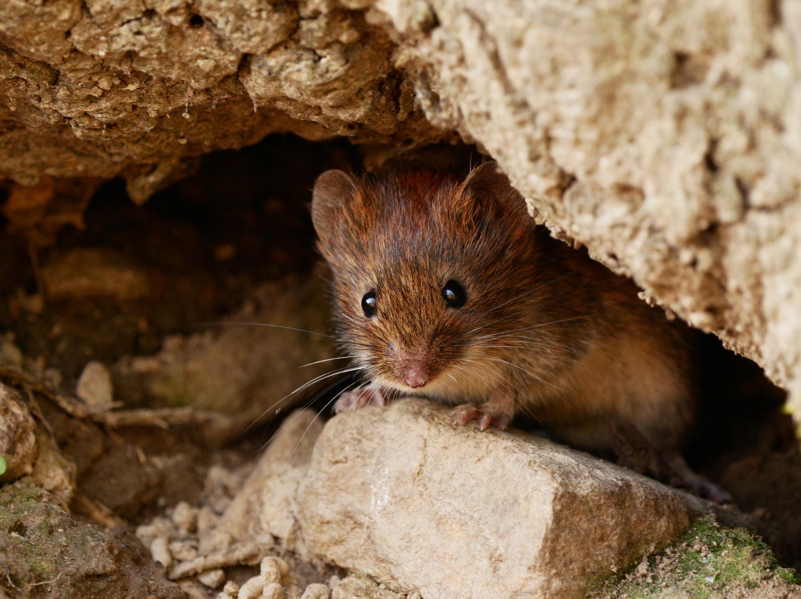 Ekelfund: Mann entdeckt tote Maus in seiner Coca-Cola-Dose!