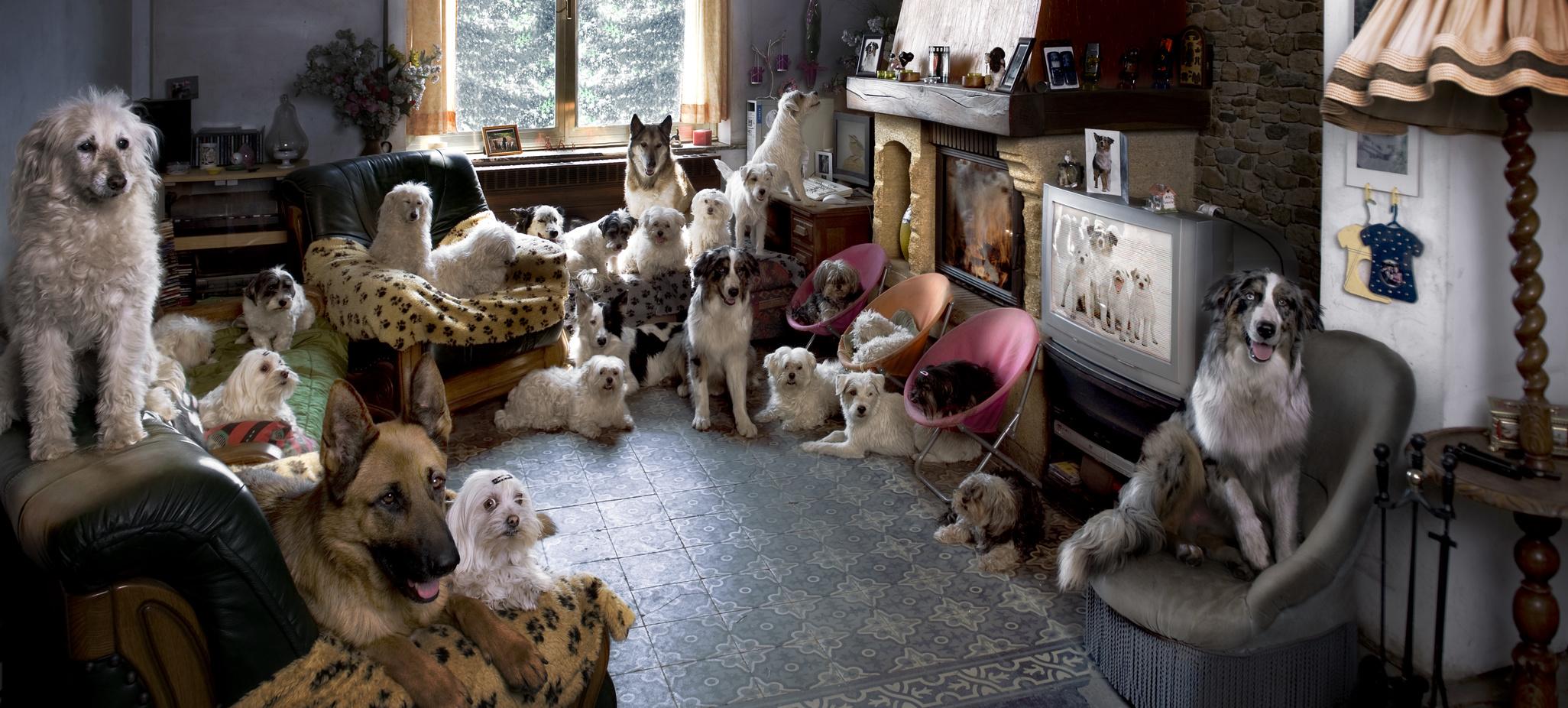 Frau vor Gericht Ihre Kinder lebten zwischen über 100 Haustieren