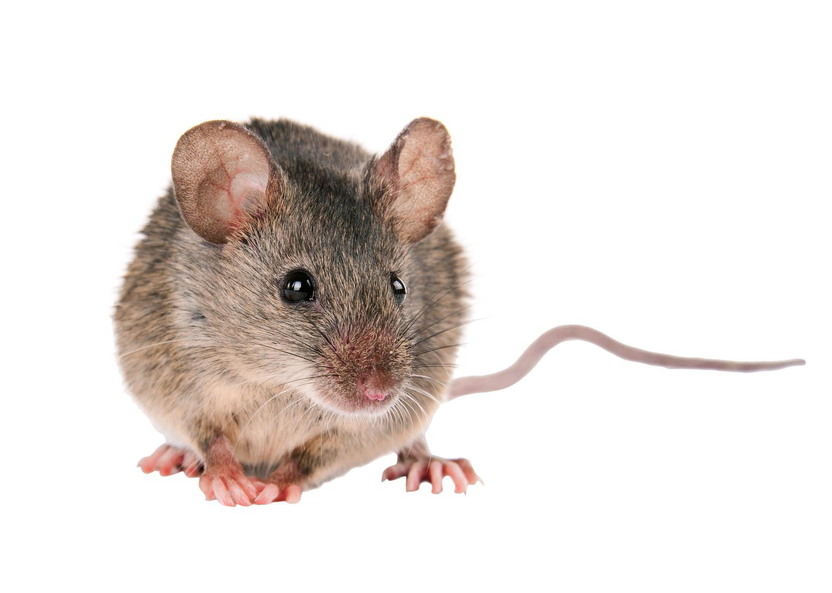 Kinder weinten Skandal-Kellner tritt Maus im Eiscafé zu Brei