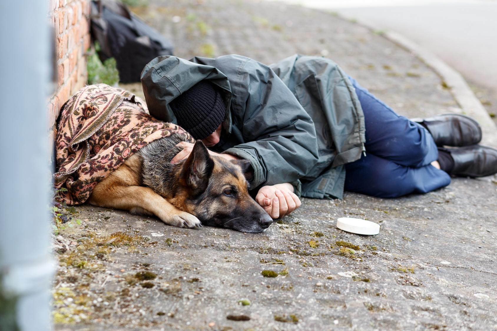 Obdachlose mit Hunden Werden die Vierbeiner betäubt