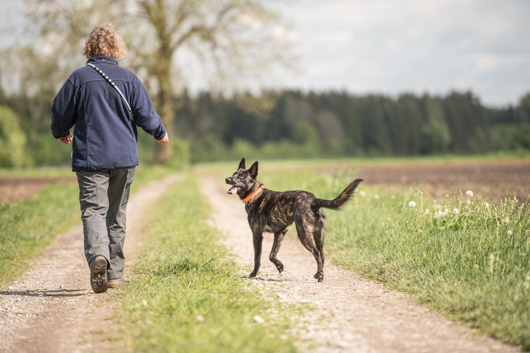 Schock beim Gassi gehen: Statt einem Stöckchen bringt der Hund das Bein einer Leiche
