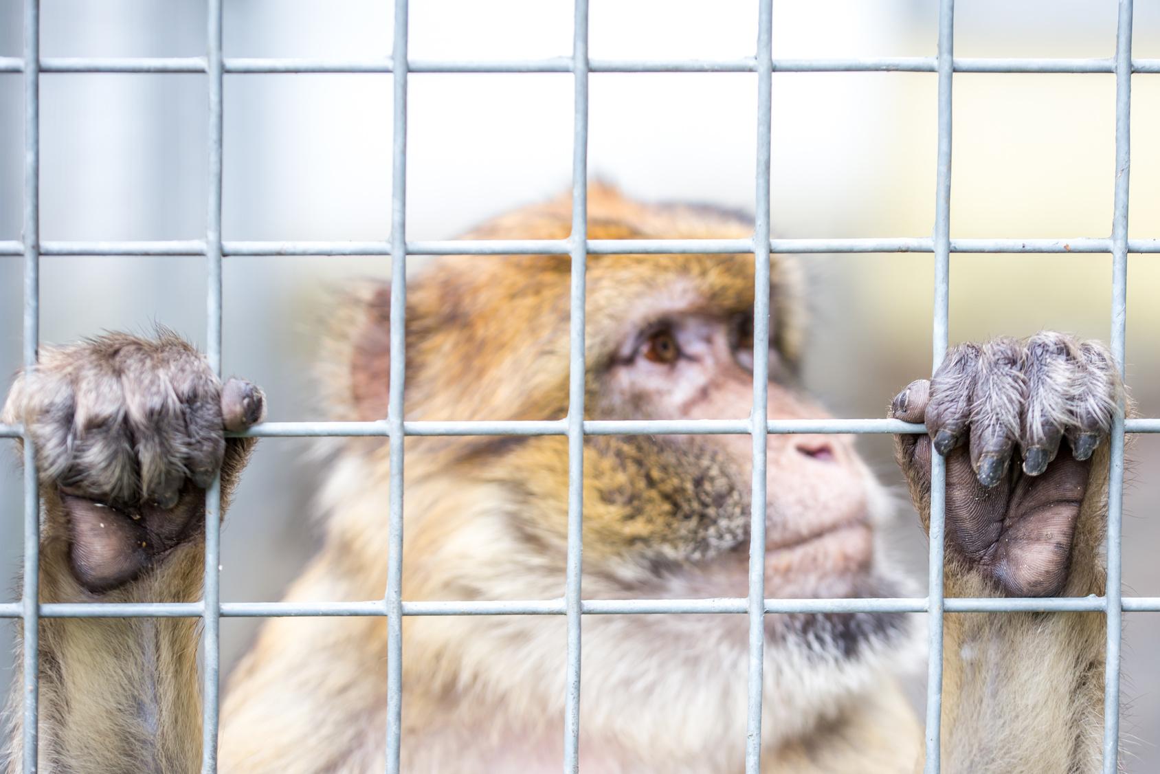 Skandal Heimliche Tierversuche an Universität Münster
