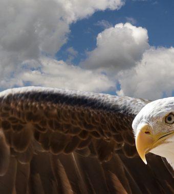 Gefahr aus der Luft: Adler im Kampf gegen den Terror?
