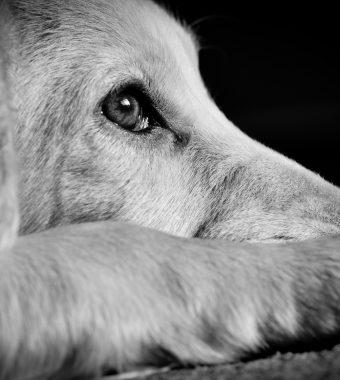 Grausamer Service: Mann verstümmelt Hunde auf offener Straße!