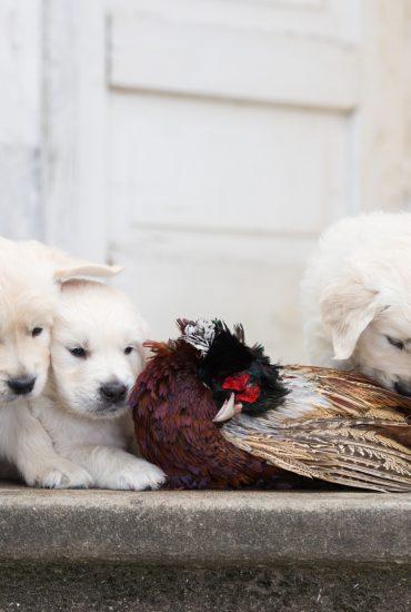 Schrecklich: Hundewelpen bei lebendigem Leibe in Wald vergraben!