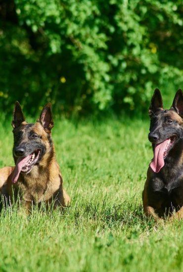 Einschläfern verhindert! Diensthunde dürfen weiterleben!