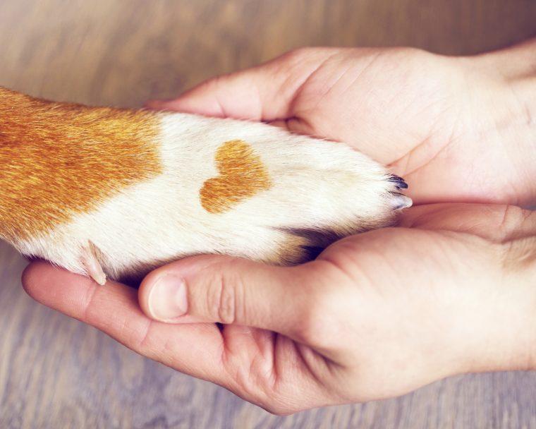 Berührende Geschichte: Todkranker Mann sucht neues Zuhause für geliebten Hund!
