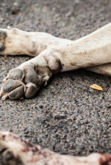 Das Tier musste elendig erfrieren: Hund angebunden und zum Sterben zurückgelassen!