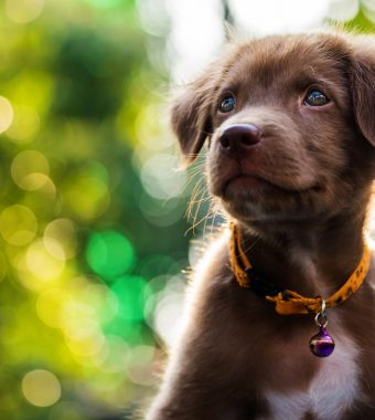 Sie filmten sich bei der grausamen Tat selbst: Tierquäler töten Hundewelpen auf brutale Weise!