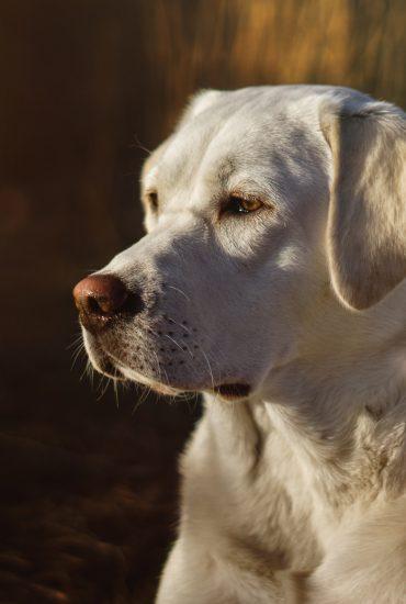 Hessen: Tierquäler schlägt auf Hund ein!