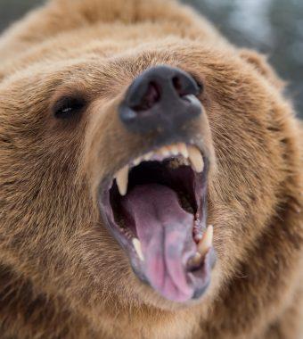Er opferte sich: Hund rettet Familie vor Bärenangriff!
