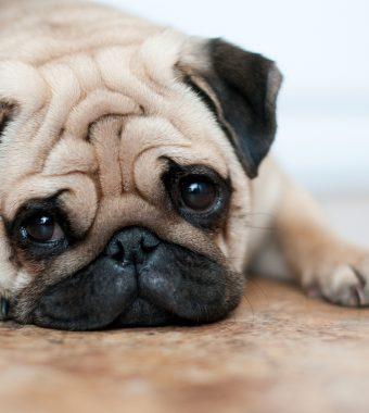 Tierhasser in Nürnberg unterwegs: Hund schluckt Gift und stirbt qualvoll!