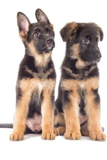 Bei Minusgraden: Schäferhund-Welpen in Sporttasche ausgesetzt!