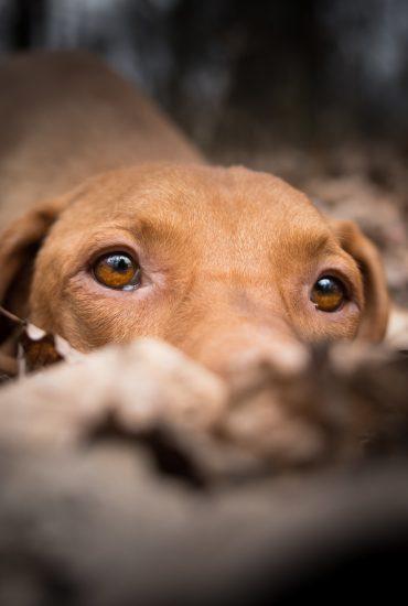 Tierquälerei: Hund mit Heißkleber übel zugerichtet!