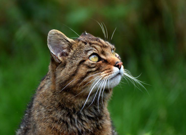 Ohren abgetrennt: Frau (68) findet grausam verstümmelte tote Katze!