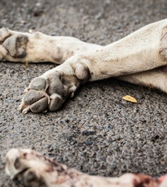 Sie ließen ihren Hund grausam erfrieren: Schuldige Besitzer verurteilt!