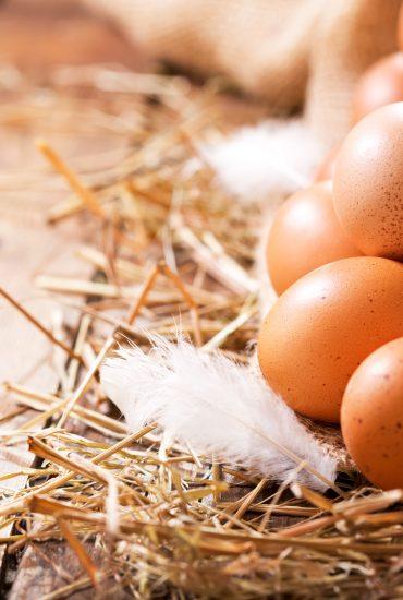 Rückruf: Salmonellen in zahlreichen Eiern gefunden!